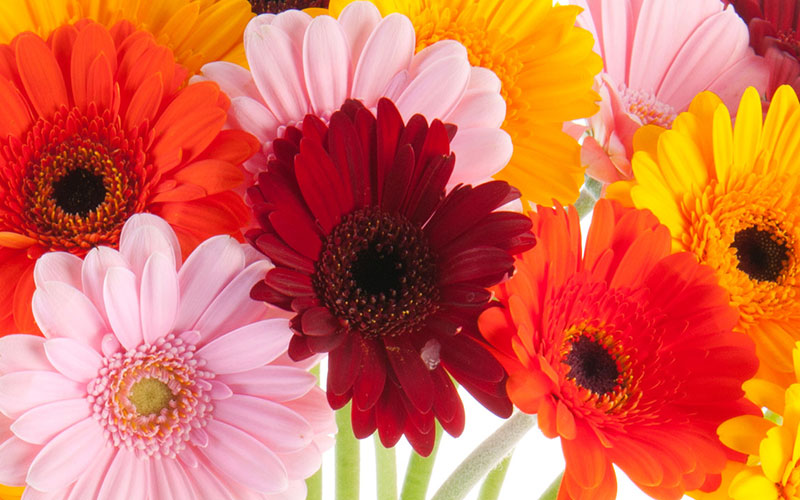Morningside Florist Get Well Flowers