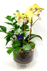 Yellow orchid garden