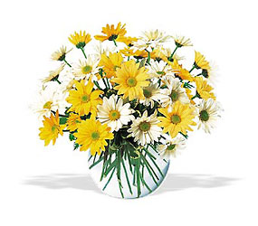 Dashing Daisies Roses Bouquet for  Sacramento Delivery Same Day